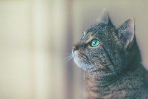 Ile kosztuje kremacja kota
